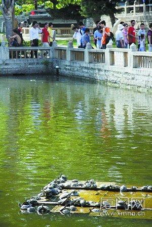 巴西龟侵占南普陀放生池 攻击性强有泛滥之虞(图)-社会消息内容-佛教在线 - 如如 - ruruyiyi5050的博客